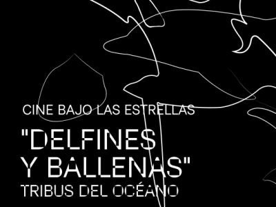 """<a href=""""/noticias/cine-bajo-las-estrellas-en-el-museo-juan-soriano"""">Cine bajo las estrellas en el Museo Juan Soriano</a>"""